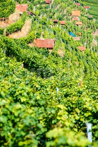 Huts in a vineyard Stock Photo