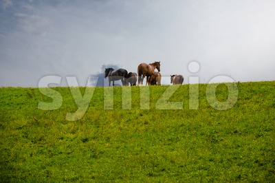 Grazing horses on the hill in rain Stock Photo