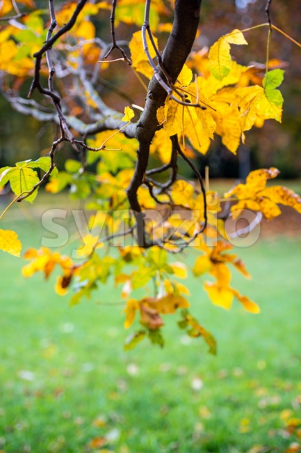 Chestnut in autumn Stock Photo