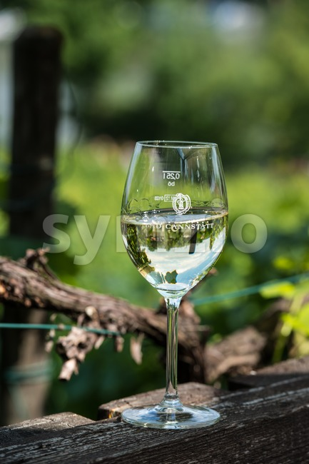 White wine glass on wooden table against vineyard in summer Stock Photo