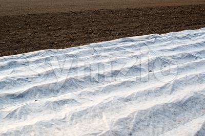 Field with greenhouse Stock Photo