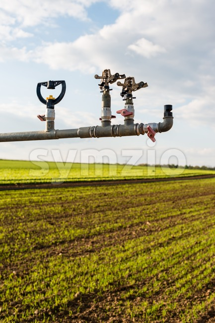 irrigation on lettuce fields Stock Photo