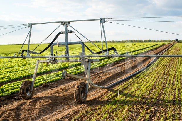 Irrigation system for watering a farm field of lettuce in early spring