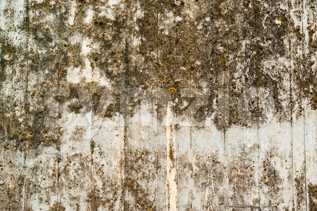 Concrete wall with lichen and moss Stock Photo
