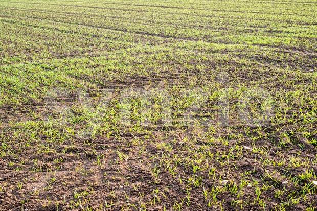 fresh plants in plantation field Stock Photo