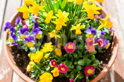 Spring plant arrangement in flower pot Stock Photo