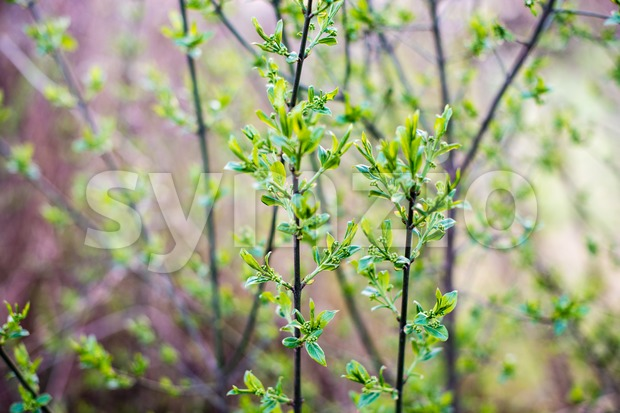 Blossoming tree branches Stock Photo