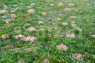 Molehill lawn Stock Photo