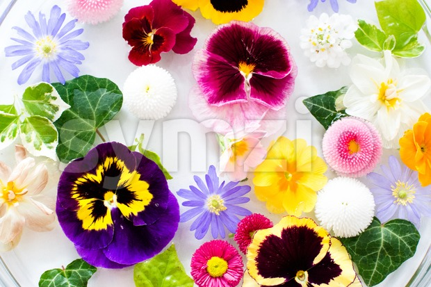 Picked Flowers Stock Photo