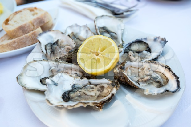 Oysters on a plate Stock Photo