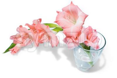 pink gladiolus isolated on white Stock Photo