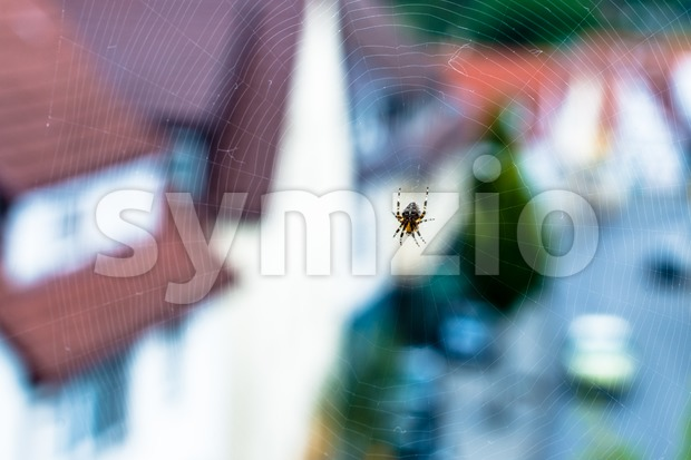 Spider with web Stock Photo