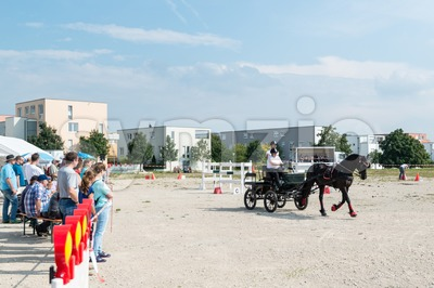 Horse Carriage Competition Stock Photo