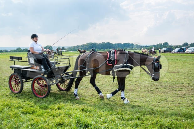 SCHARNHAUSEN, GERMANY - SEPTEMBER 07, 2014: Riders with horse carriages are competing in various category races with ponies and horses ...