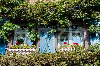 rural window framed by wine Stock Photo