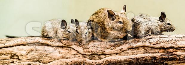 Gerbils family Stock Photo