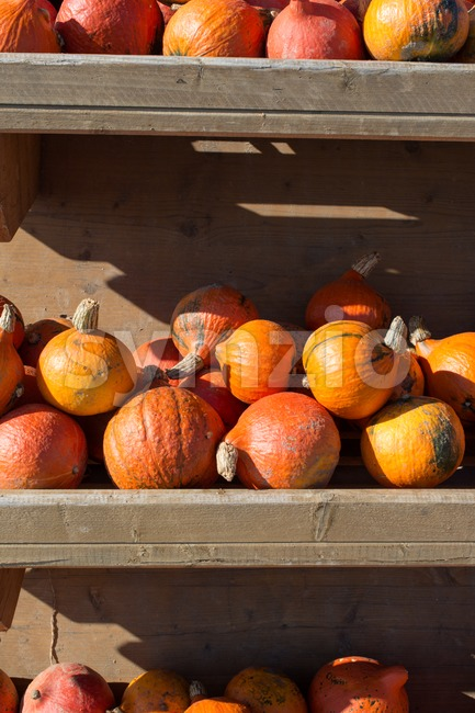 Pumpkins for sale Stock Photo