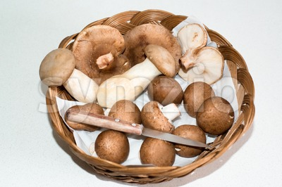 Collected Mushrooms Stock Photo