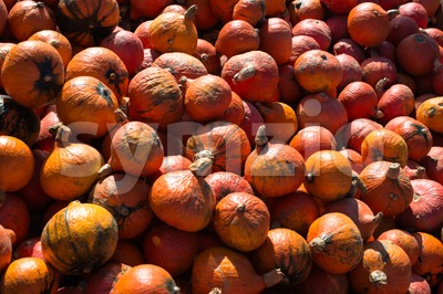 Heap of pumpkins Stock Photo