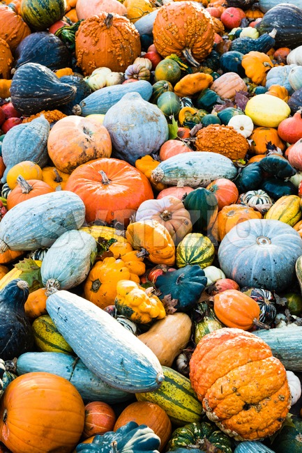 Delicious, colorful variety of different fresh sorts of pumpkins