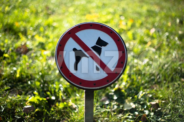No dogs allowed sign protecting a meadow in a park
