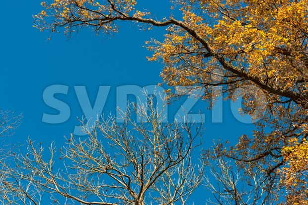 Autumn leaves against great blue sky with space for your copy text