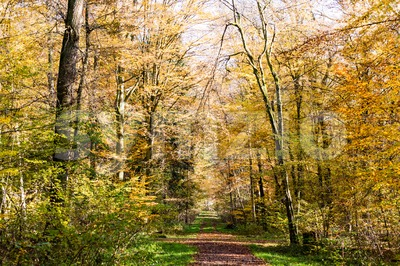 Pathway through the autumn forest Stock Photo