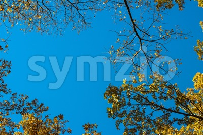 Autumn leaves against blue sky Stock Photo