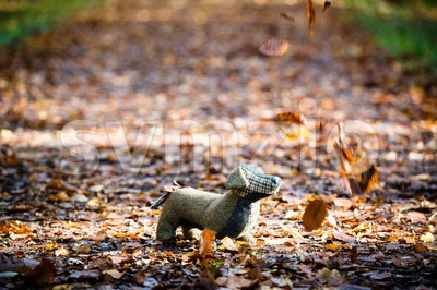 Soft toy dog is placed in autumn forest Stock Photo