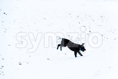 Dog jumping in snow Stock Photo
