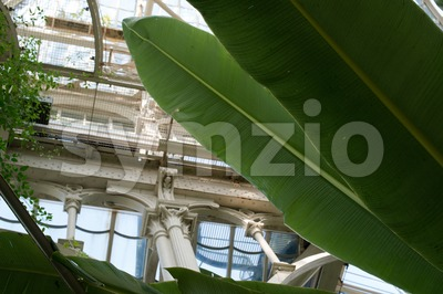 Inside Beautiful Old Greenhouse Stock Photo