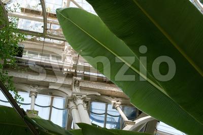 Inside Beautiful Old Greenhouse Stock Photo