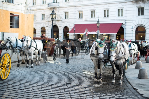 VIENNA - OCTOBER 3:  Traditional horses and carriage (also called Fiaker) waiting at the famous Hofburg on October 3, ...