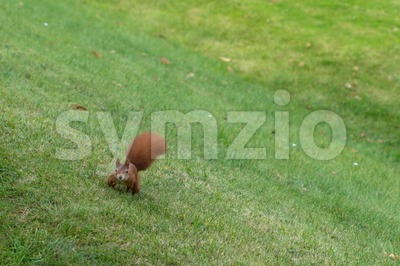 Squirrel eating nuts Stock Photo