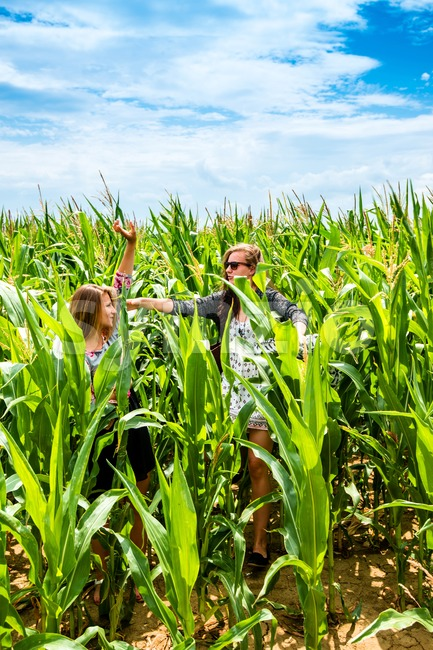 Portrait of two young girls having fun in a green cornfield, running through the field