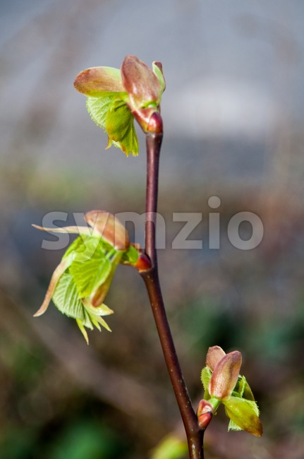 Spring Bud Stock Photo