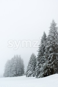 Trees during snowfall in winter Stock Photo