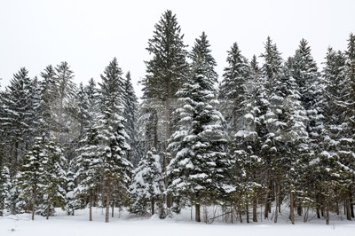 Winter forest covered by snow Stock Photo
