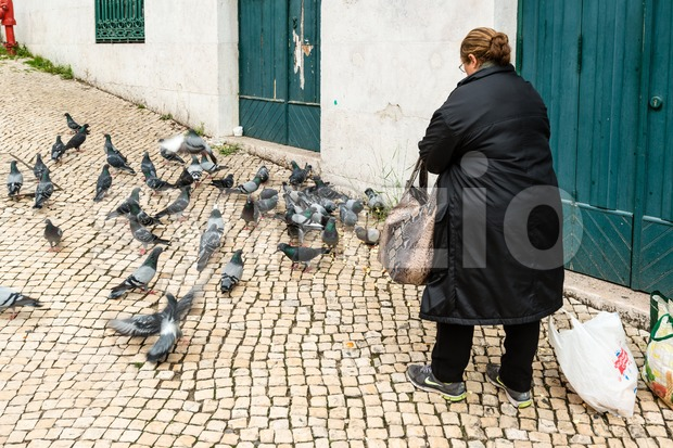 Old woman feeding pigeons Stock Photo