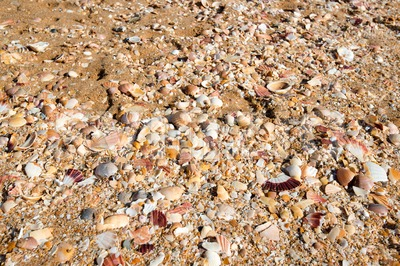 Sea shells in sand Stock Photo