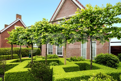 Decorative green buxus bushes Stock Photo