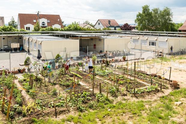 Gardening activities in a German refugee camp Stock Photo