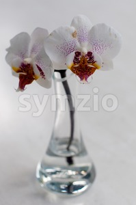 Orchid In Vase Stock Photo