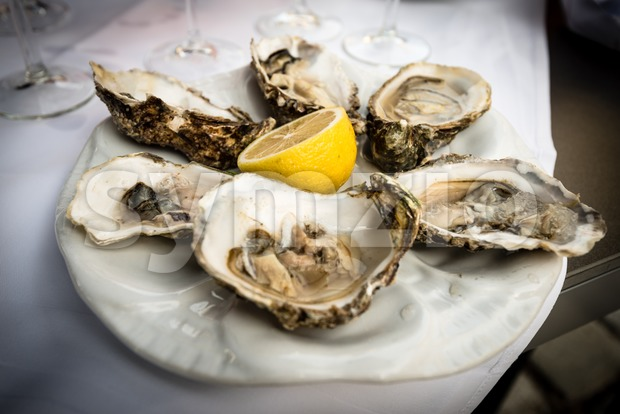 Hald dozen fresh oysters on a white plate with a lemon