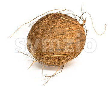 coconut on white background Stock Photo