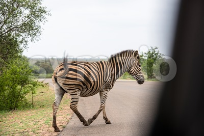 Zebra crossing g Stock Photo