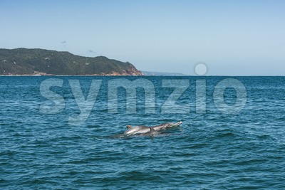 Dolphin family playing close to the coast Stock Photo