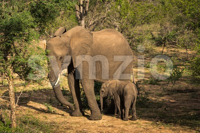 Young elephant with its mother Stock Photo