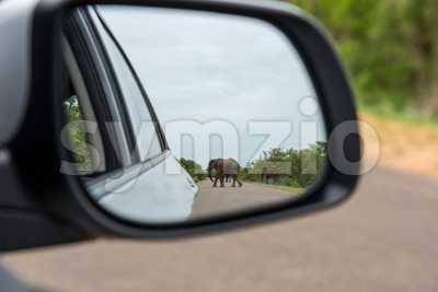 Reflection Of Elephant In Rear View Mirror Stock Photo