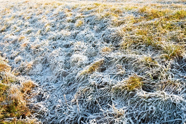 frozen grass in winter Stock Photo